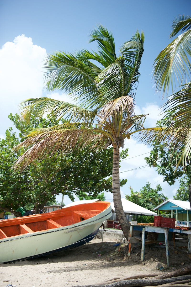 st. Lucia, palm trees, beaches
